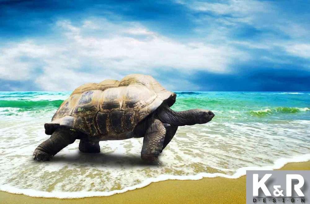 русская картинки черепаха город гостиная казалась